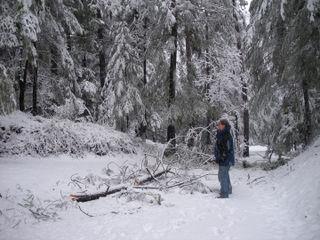 Feb.13-treedown