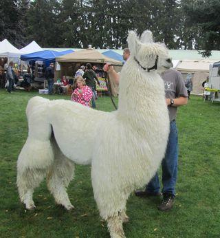 Llama2-OFFF