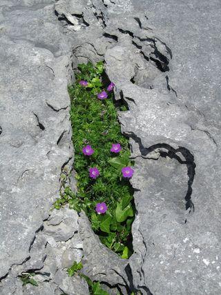 BurrenFlora2
