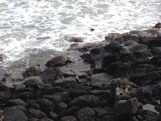 TurtleTime-copy