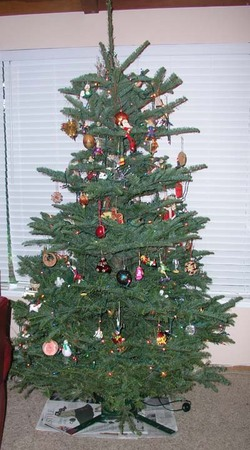 2005_christmas_tree