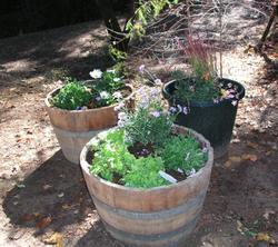 First_barrel_gardens